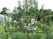 2008北海道夏152.jpg