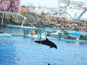 名古屋港水族館20.jpg