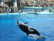 名古屋港水族館24.jpg