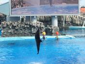名古屋港水族館19.jpg