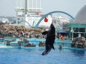 名古屋港水族館25.jpg
