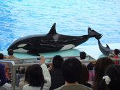 名古屋港水族館26.jpg