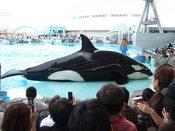 名古屋港水族館28.jpg
